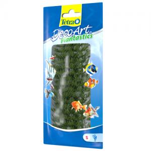 צמח דקורטיבי אגמית (Ambulia)