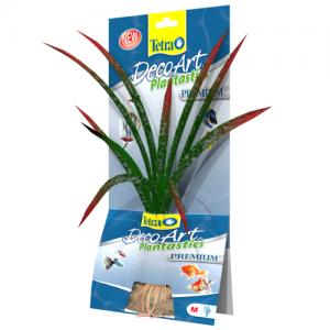"""צמח דקורטיבי אש הדרקון (Dragonflame) באורך של 15 ס""""מ עד 35 ס""""מ"""