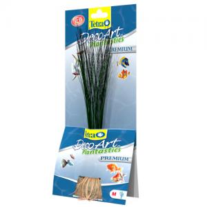 "צמח דקורטיבי אלוכאריס (Hairgrass) באורך של 15 ס""מ עד 35 ס""מ"
