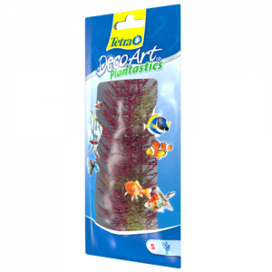 צמח דקורטיבי פוקסטייל אדום (Red Foxtail)