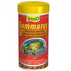 מזון טבעי לצבי מים המכיל סרטני גמרוס שלמים