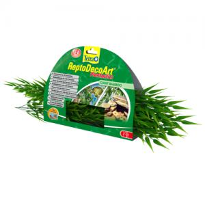 צמח דקורטיבי במבוק (Bamboo) לכל סוגי הטרריומים